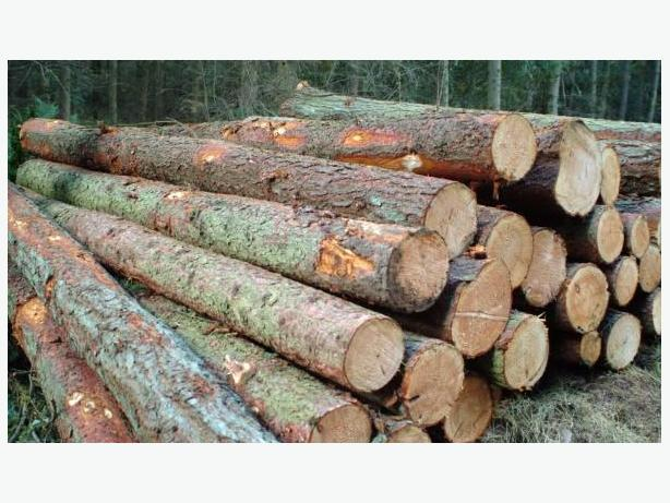 Wanted info on U-CUT fire wood.. or logging truck of logs