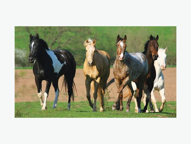 WANTED: LEASE HORSES(S)