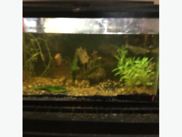 simi aggressive fish an tank