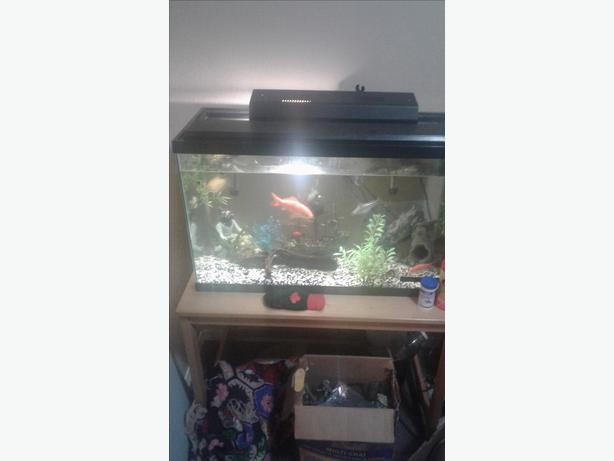 Fish an 50 gallon tank an stand