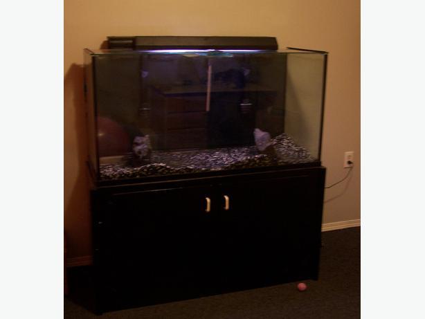 90gal fish tank