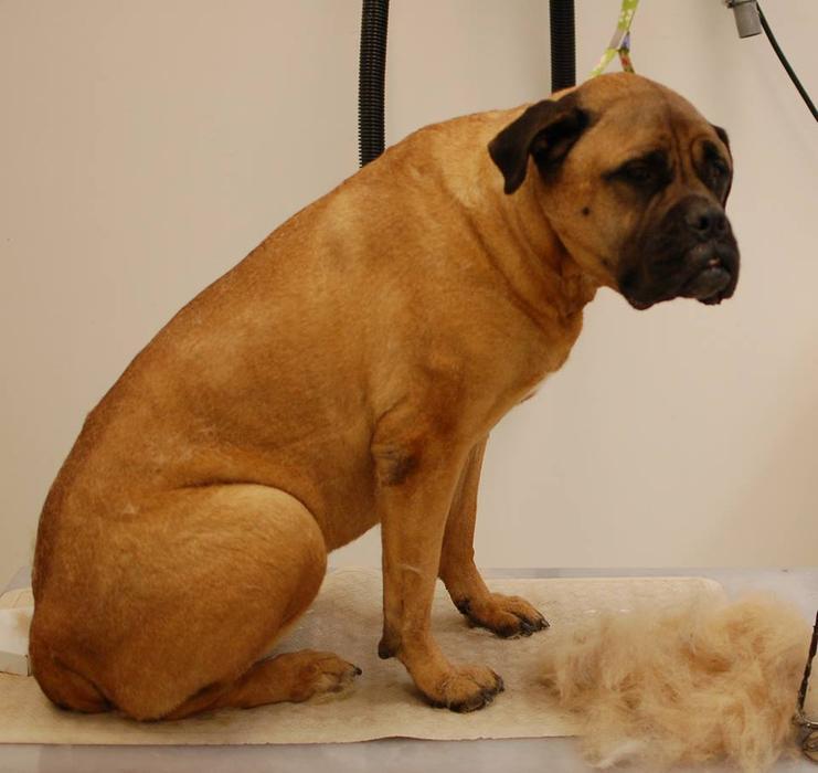 Mobile Dog Grooming Hamilton