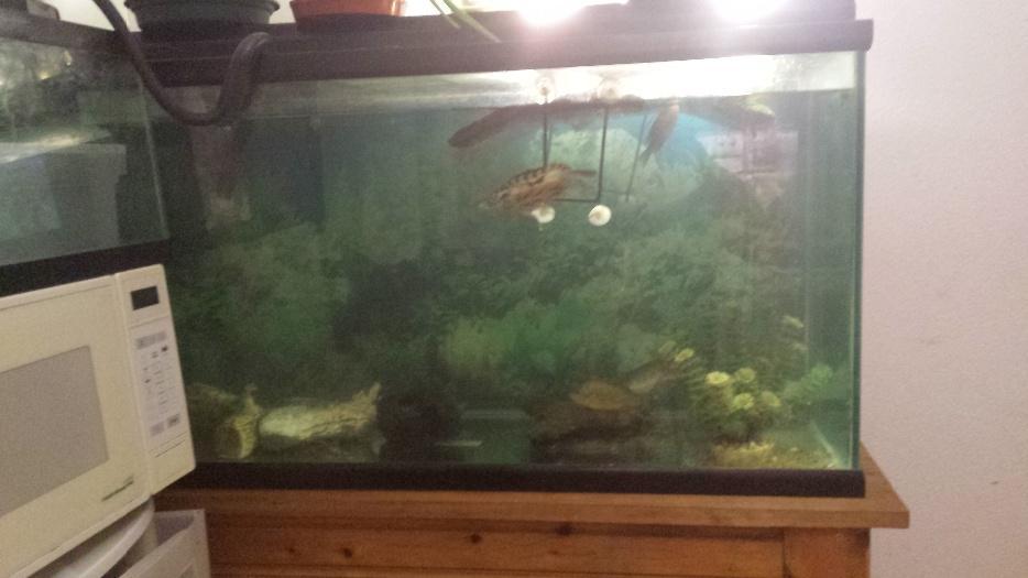125 gal fish tank w stand outside nanaimo nanaimo for 125 gallon fish tank stand