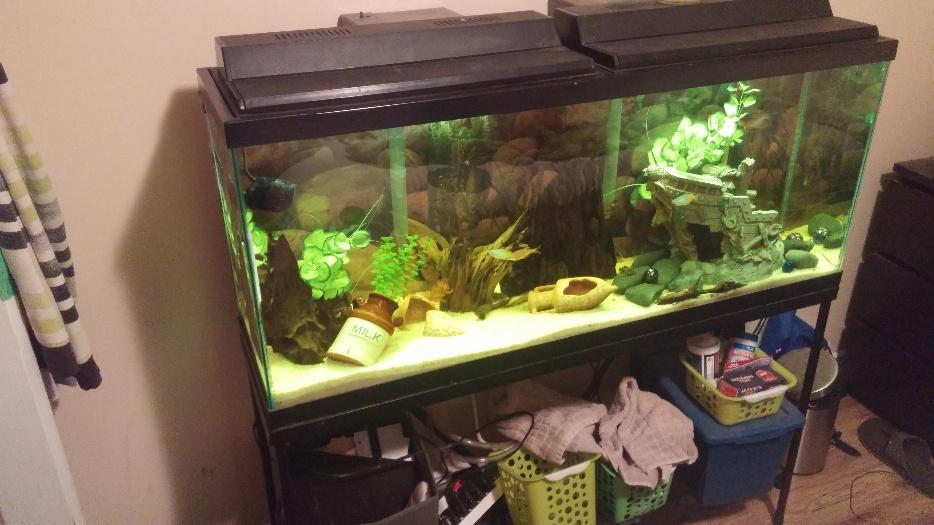 55 gallon aquarium set up esquimalt view royal victoria for 55 gallon fish tank setup
