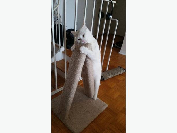 New Carpeted Cat Scratch Post.