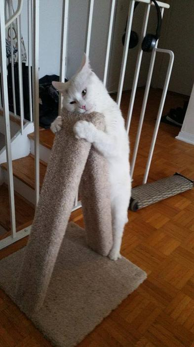 The Wave Nanaimo >> NEW PRICE!!!! New Carpeted Cat Scratch Post. Gloucester ...