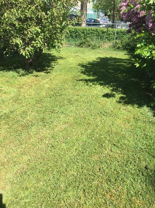Landscaping Trees Regina : Tree cutting trimming landscaping yard cleanups east regina
