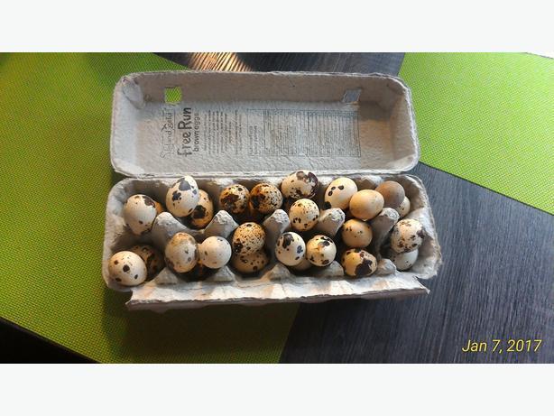 30 Organic Quail Eggs