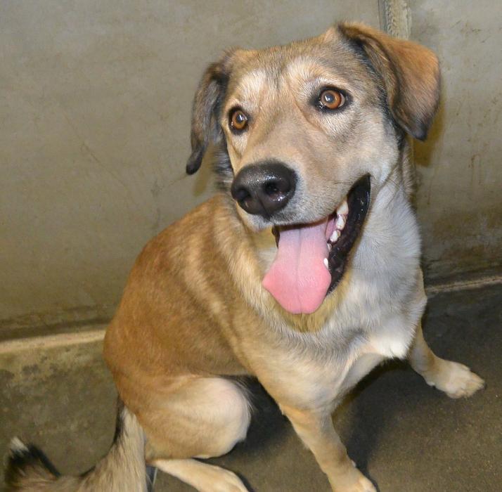 Dogs For Adoption York Region Ontario