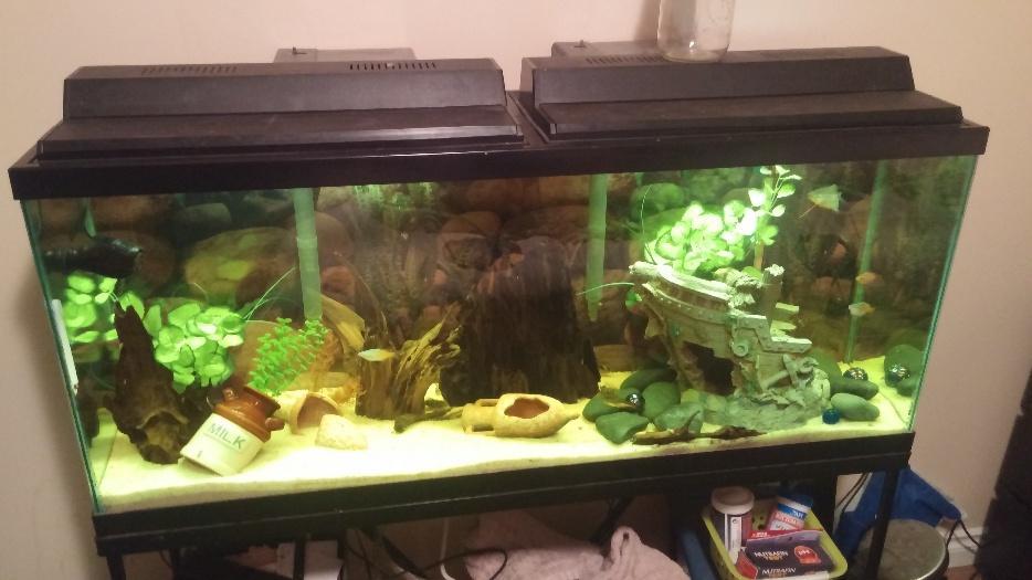 55 gallon aquarium full set up esquimalt view royal for 55 gallon fish tank setup
