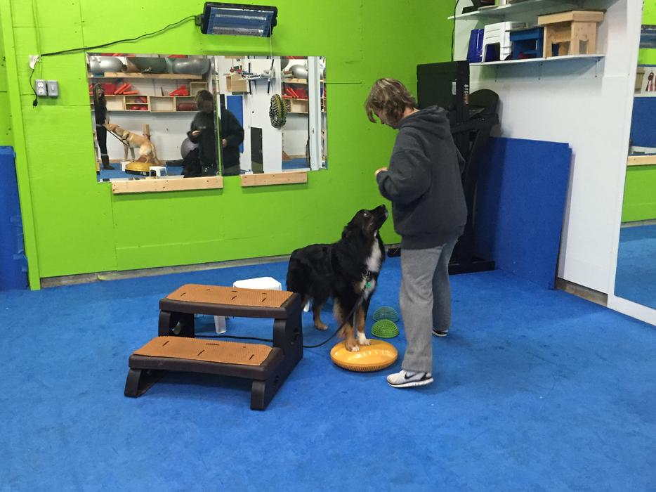 Best Dog Training Classes Toronto