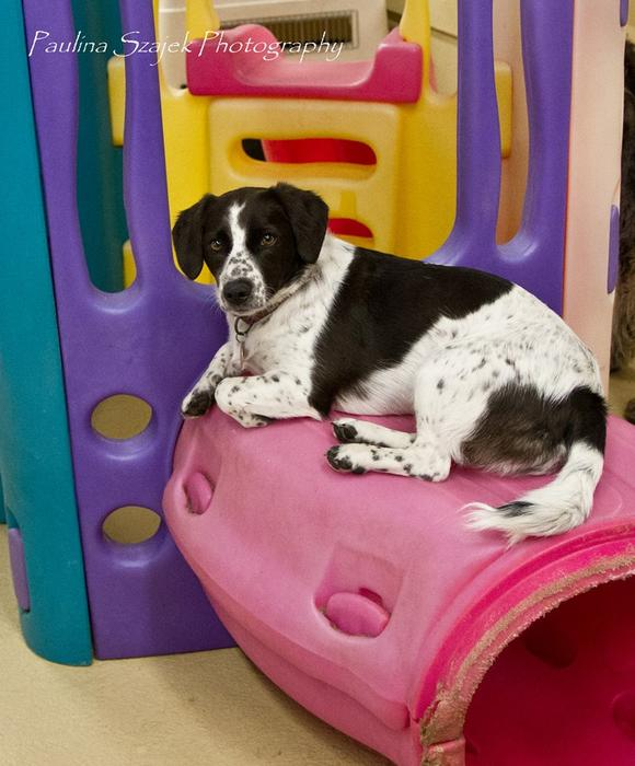 Best Dog Daycare Edmonton