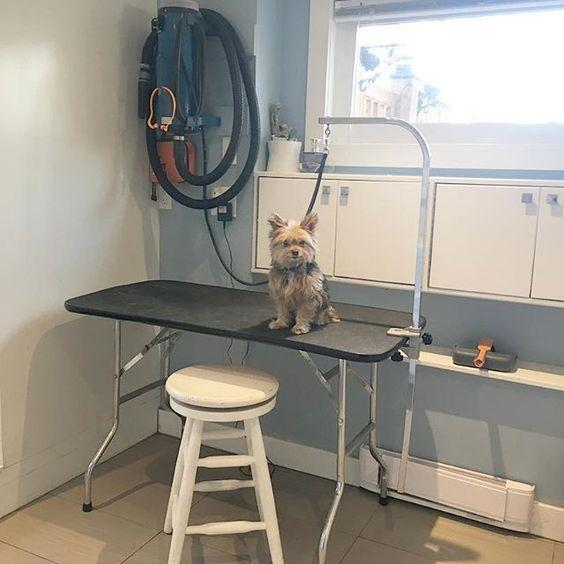 Dog Grooming Central Saanich