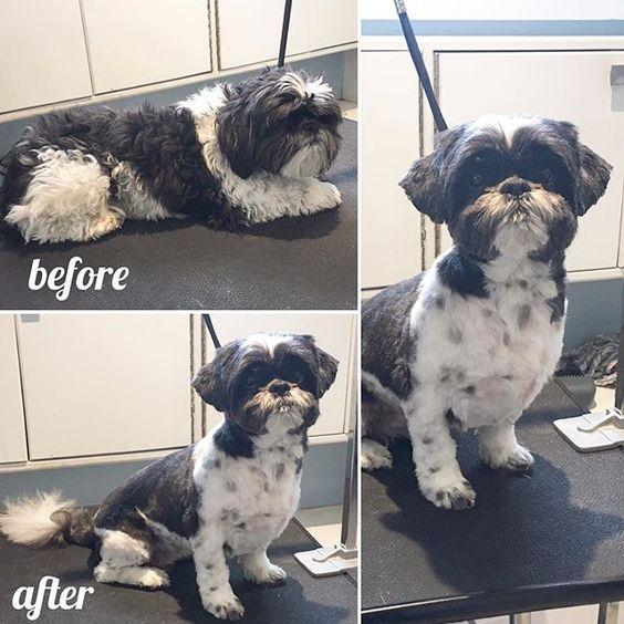 Dog Grooming Quesnel
