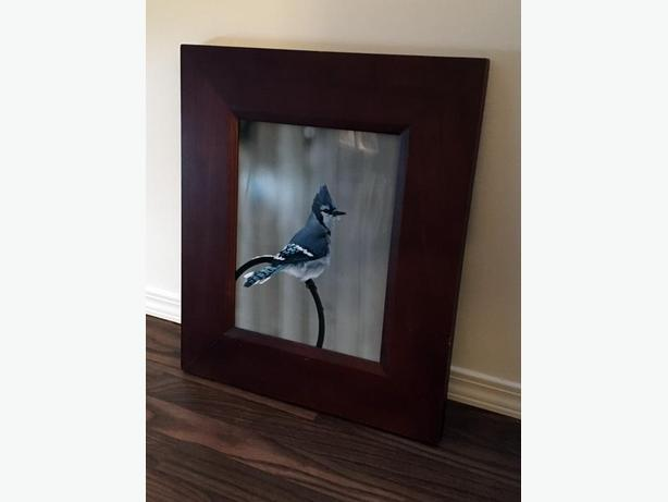Framed Bluejay Photo