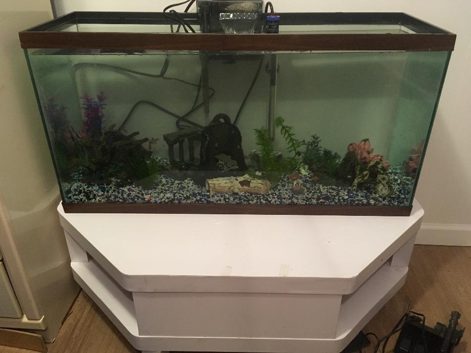 Cash or trade 55 gallon tank set up saanich victoria for 55 gallon fish tank setup