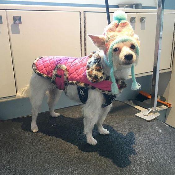 Dog Grooming On Victoria St Kitchener