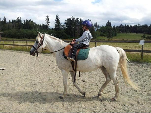 Beginner Riding Lessons for Children up to the age of 12