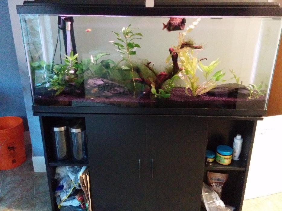 55 gallon fish tank and stand 450 obo victoria city victoria for 55 gallon fish tank and stand