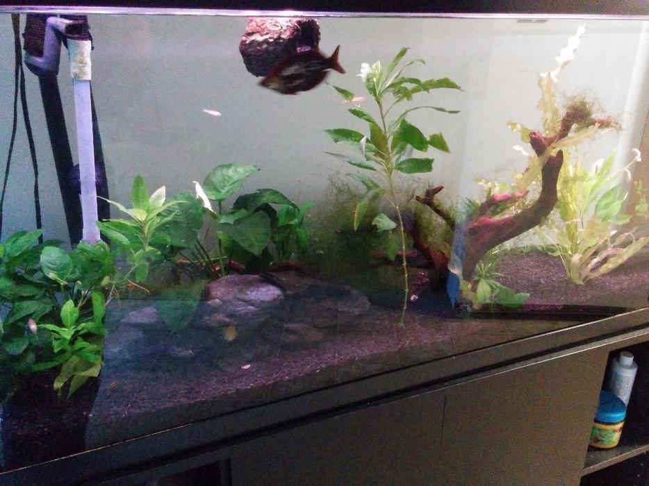 55 gallon fish tank and stand 450 obo victoria city victoria for 100 gallon fish tank with stand