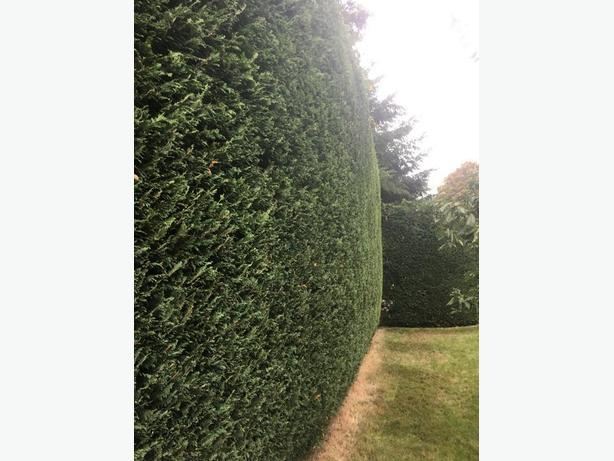 *Hedge & Shrub Trimming*