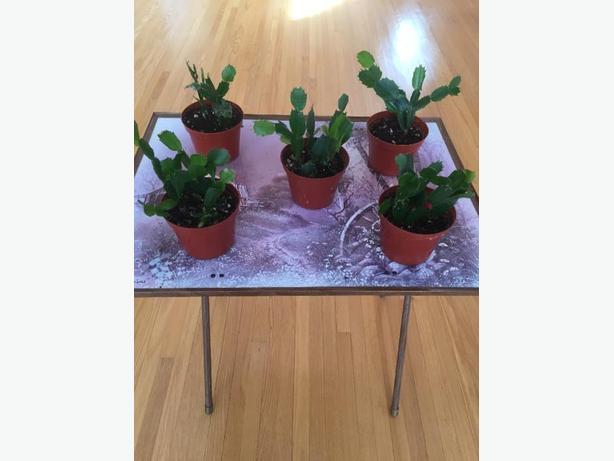 House Plants / Indoor Plants