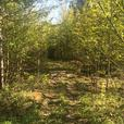 109 acres of land for $125 000 - fast sale !!!!! - $125000