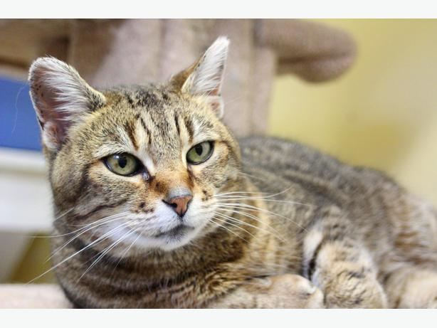Cats For Adoption Fraser Valley