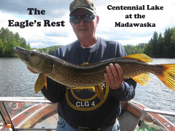 Pet friendly water front cabin rentals on the Madawaska River