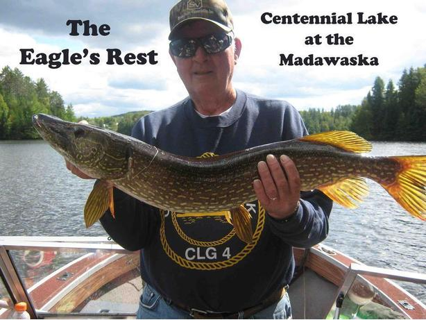 Pet friendly water front Cabin rental on the Madawaska River