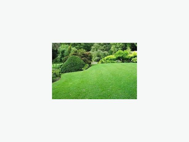 Do you need a new lawn or Lawn Makeover?  We are the place to call..