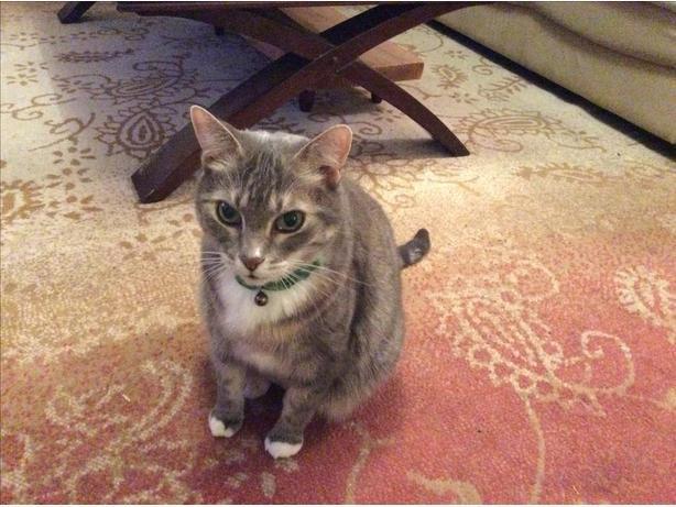 Cat Attendant
