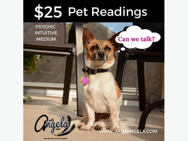 Pet readings- with ANGELA! Psychic Intuitive Medium