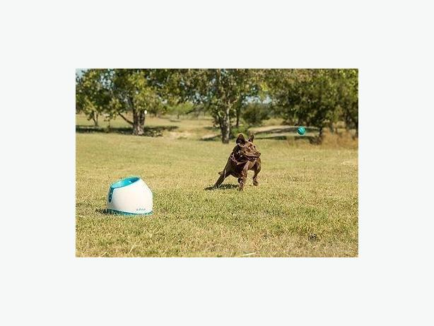 iFetch Too automatic ball launcher for dogs