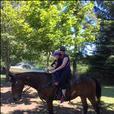 Morgan X Quarter Horse Gelding