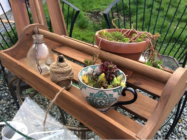 solid wood, potting / seeding tray