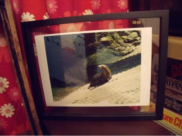 MODERN VERsATILE CHERRY WOOD FRAME SEAL PICTURE NICELY DONE $10 ...