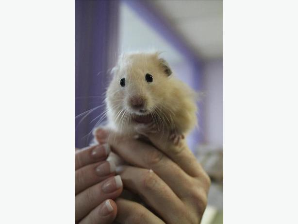 Gus - Hamster Small Animal