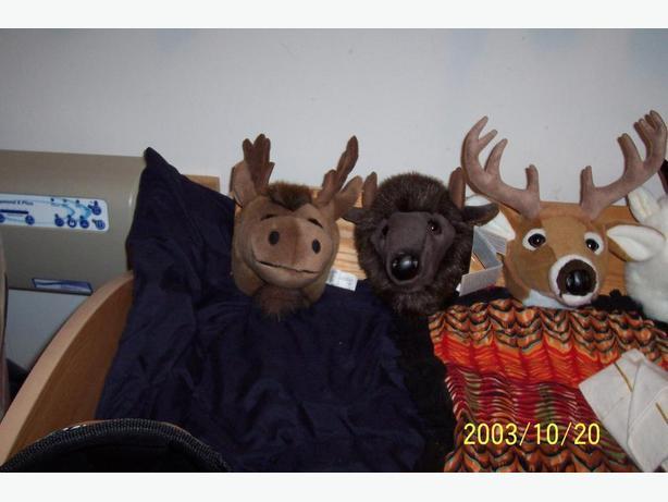 Mounted Stuffed animal  heads XMAS GIFT