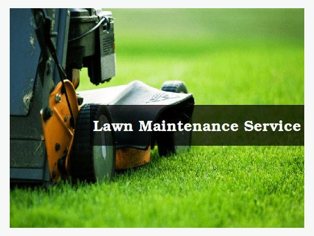 Why You Need Lawn Care in Calgary | Lawn Father