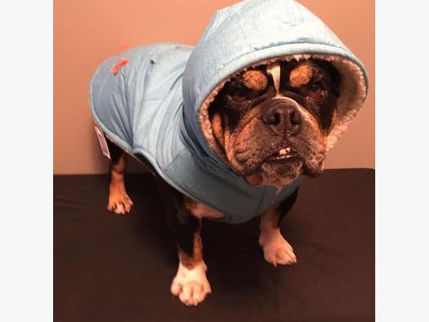 Brand New Large Dog Jacket