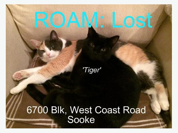 ROAM ALERT - Lost Cat: Tiger