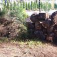 Big pile of dry firewood...cadboro bay