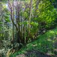 30-50 Acres of Land with Views Just Outside Victoria
