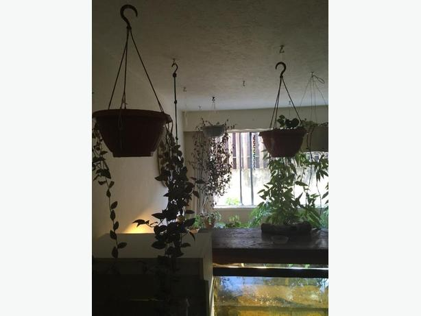 House Plant Sale ( Moving )