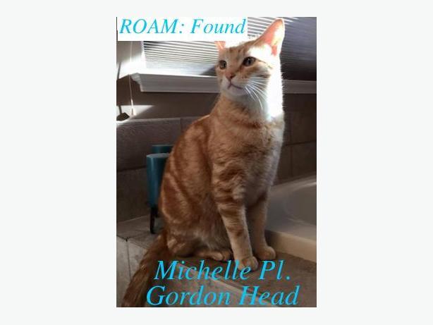 ROAM. FOUND CAT in GORDON  HEAD