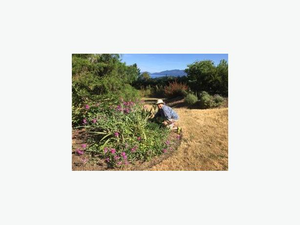 Ascot Gardening