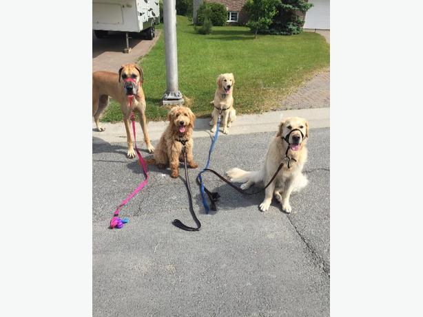 lively area petsitting and dog walking