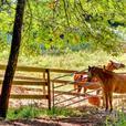 Premier Equestrian Property for Sale