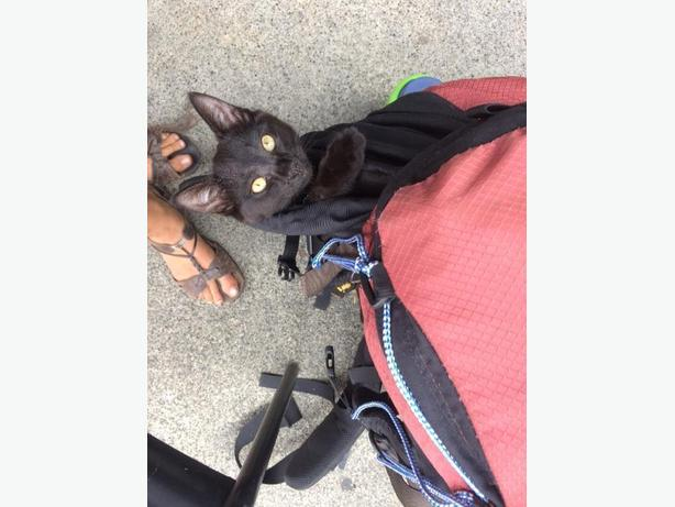 lost kitten 3 months old black